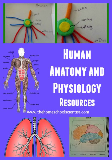 Human Anatomy And Physiology Resources - The Homeschool Scientist