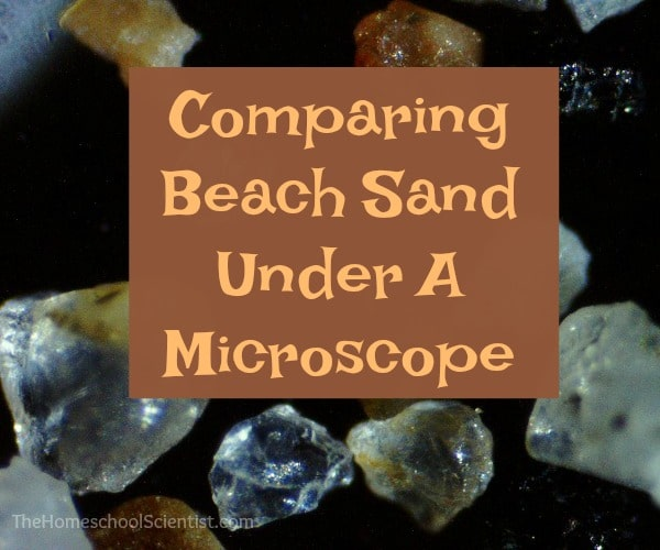 Comparing Beach Sand Under The Microscope